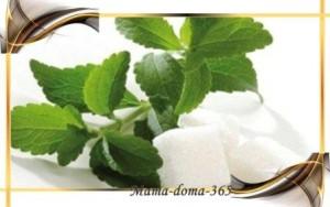 steviya-trava